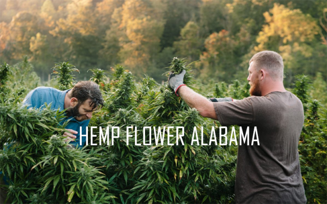 Hemp Flower Alabama