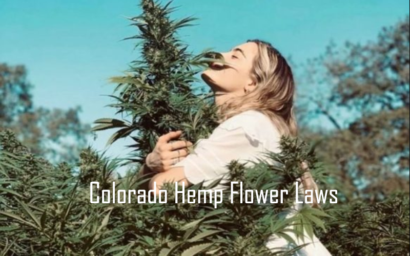 Colorado Hemp Flower Laws