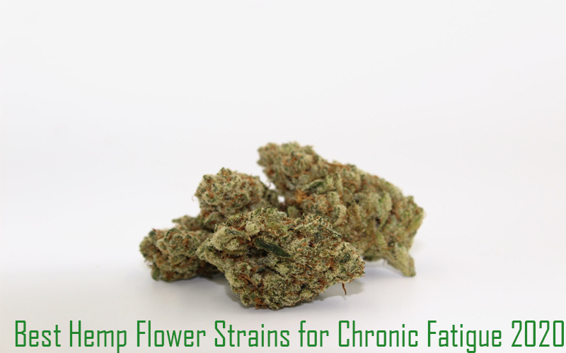Best Hemp Flower Strains for Chronic Fatigue