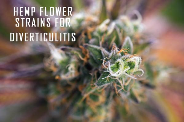Hemp Flower strains for diverticulitis