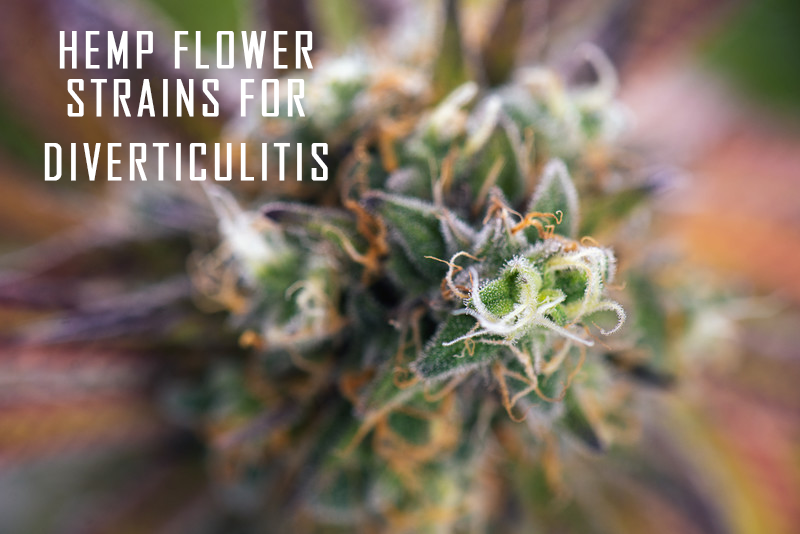 Hemp Flower strains for diverticulitis
