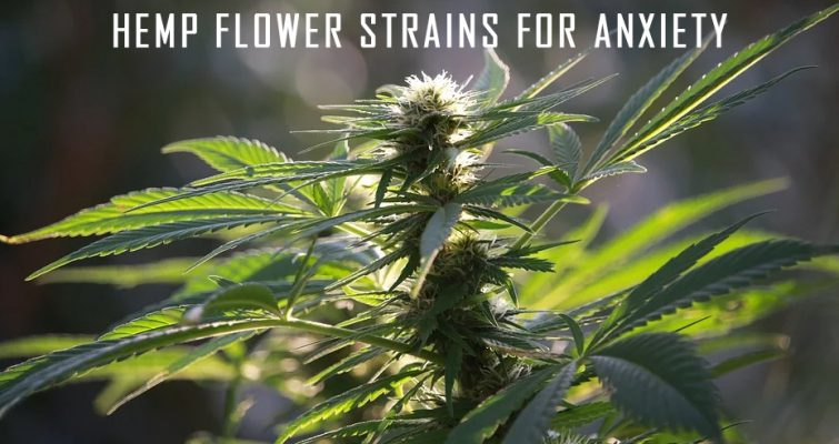 Hemp Flower For Anxiety
