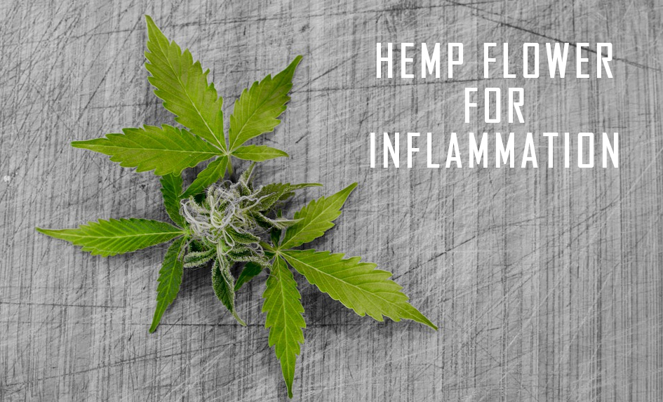 Hemp Flower For Inflammation
