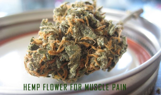Hemp Flower For Muscle Pain