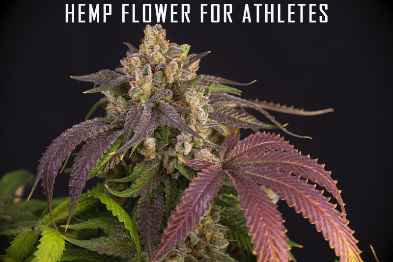 hemp flower for athletes