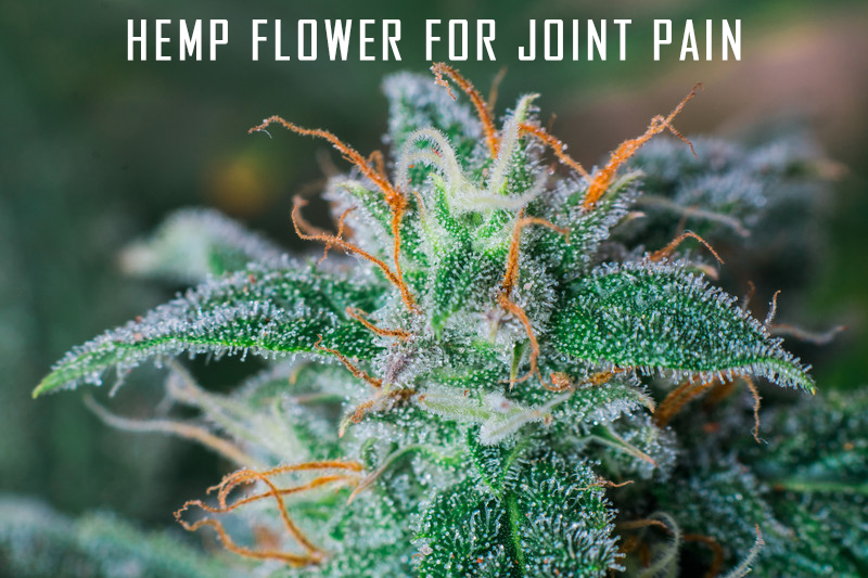 hemp flower for joint pain