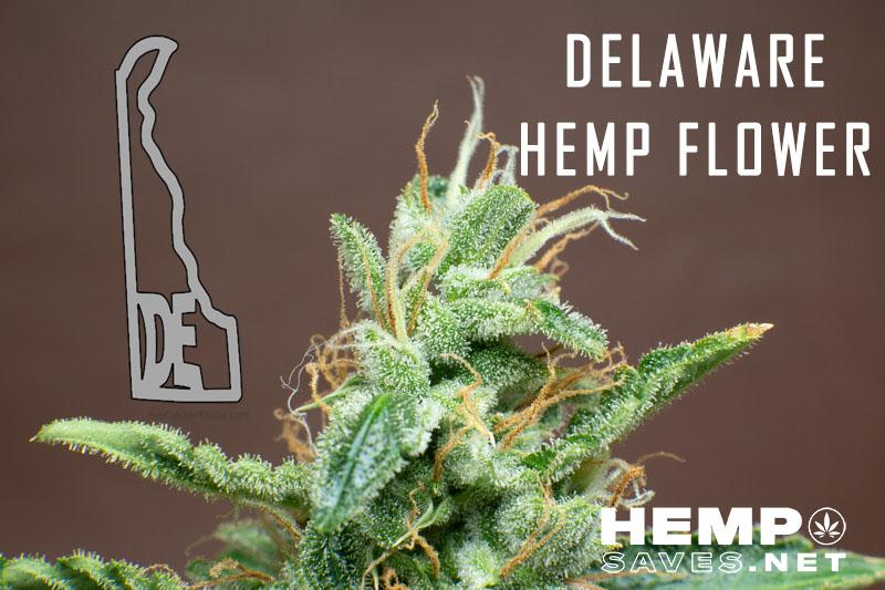 Delaware Hemp Flower
