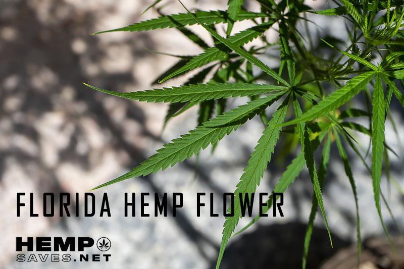 Florida Hemp Flower