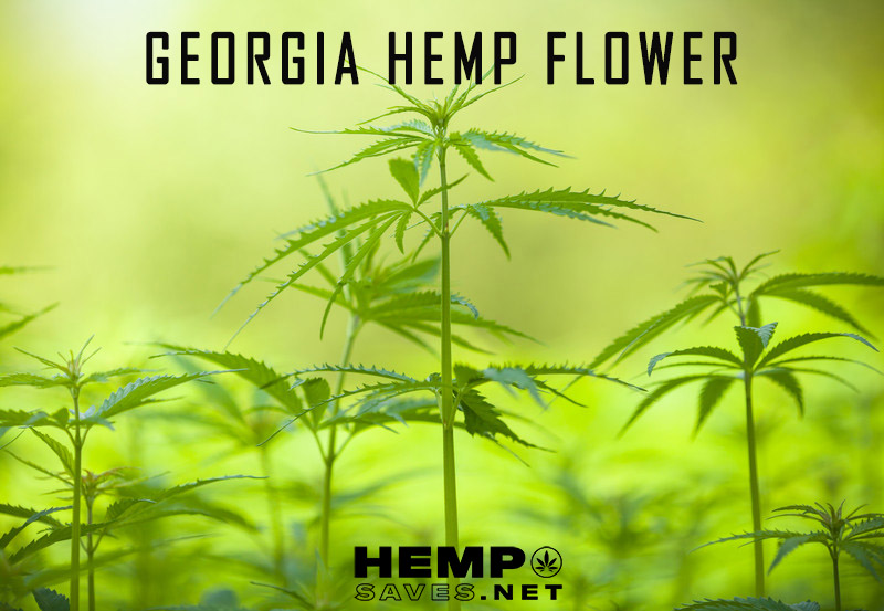 Georgia Hemp Flower