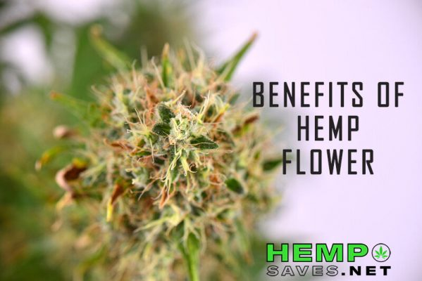 Hemp Flower Benefits