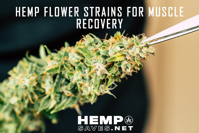 Hemp Flower For Muscle Recovery