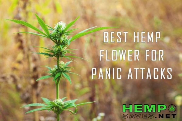 Hemp Flower For Panic Attacks