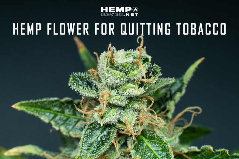 Hemp Flower For Quitting Tobacco